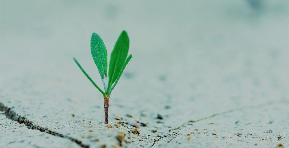 Groei en ontwikkeling